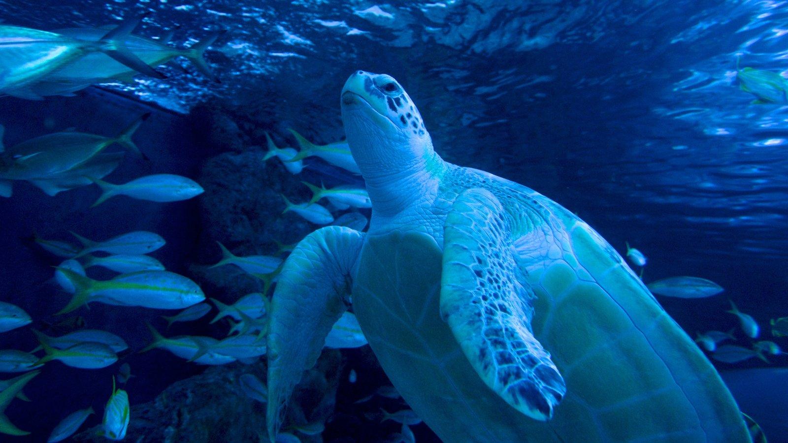 Ripley\'s Aquarium que inclui vida marinha
