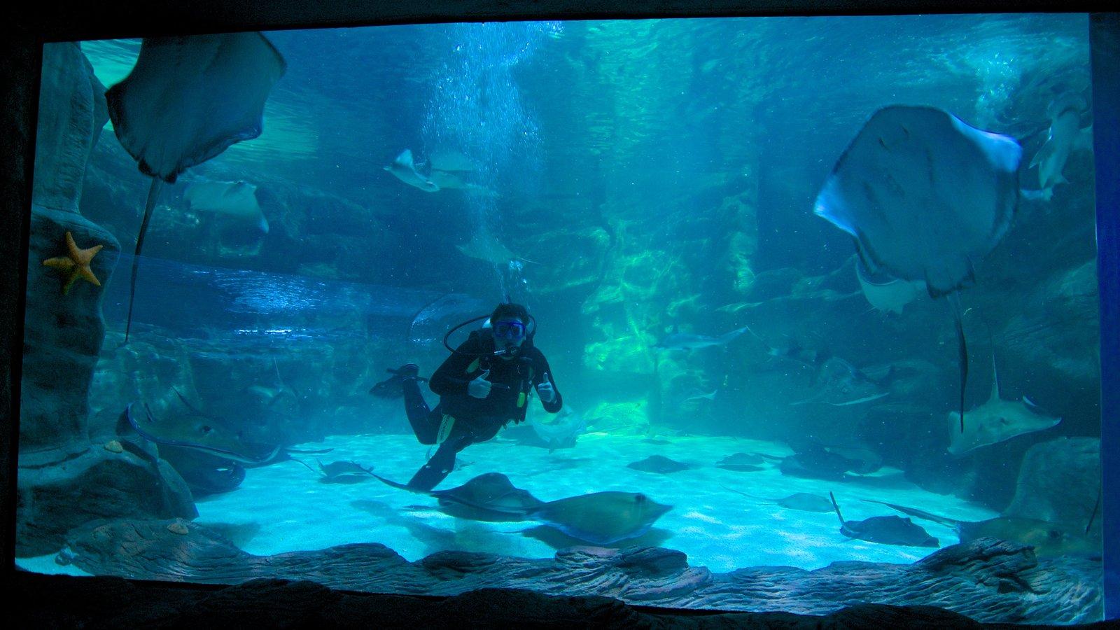 Ripley\'s Aquarium mostrando vistas internas, coral e vida marinha