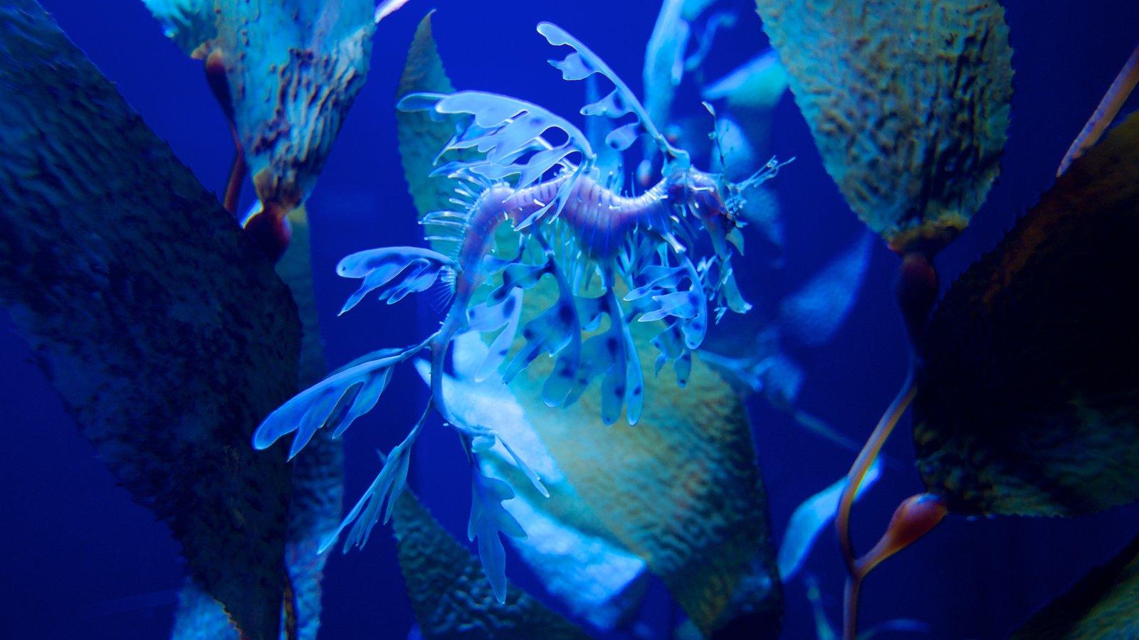 Ripley\'s Aquarium mostrando vida marinha