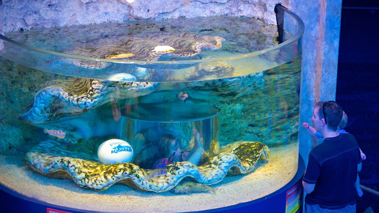Ripley\'s Aquarium mostrando vida marinha e vistas internas