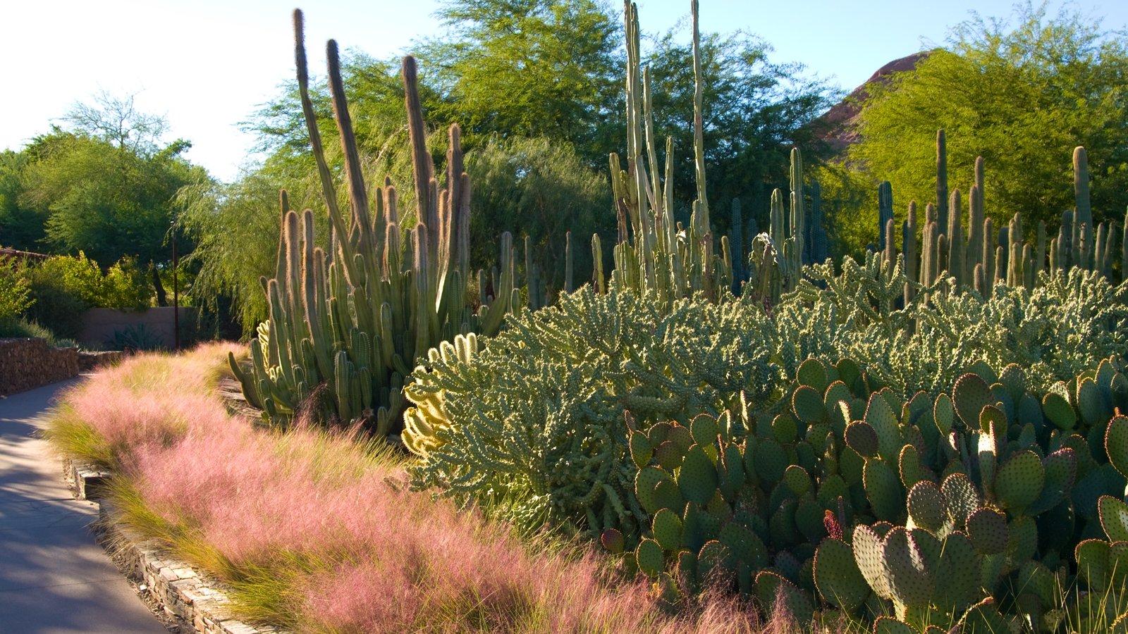 Desert Botanical Garden showing a park, desert views and landscape views