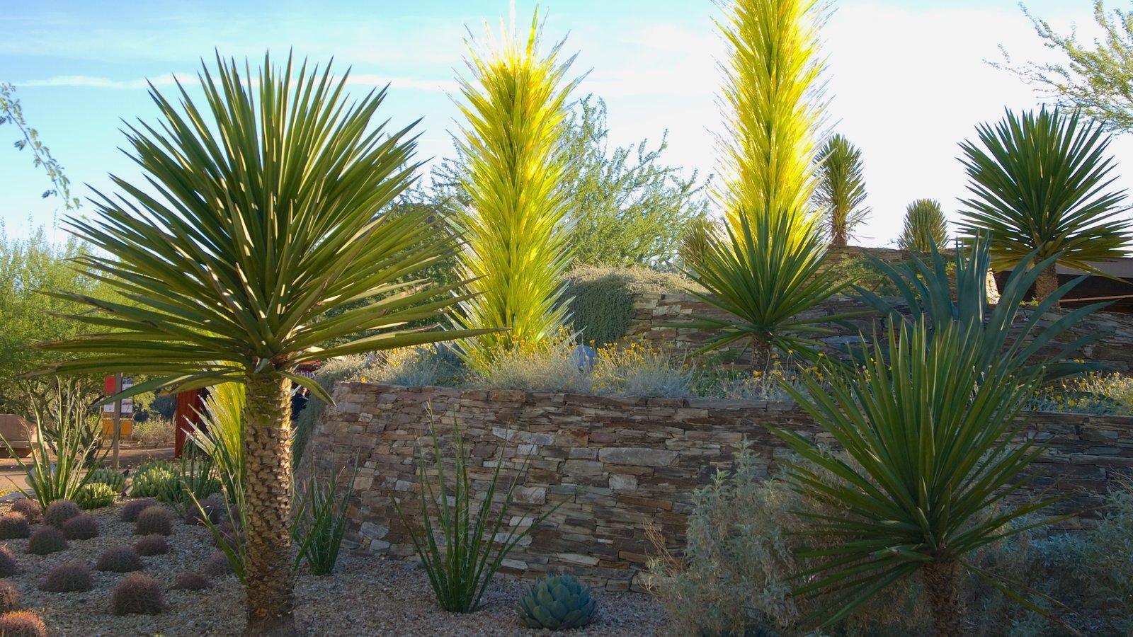 Desert Botanical Garden que inclui um parque e paisagens do deserto