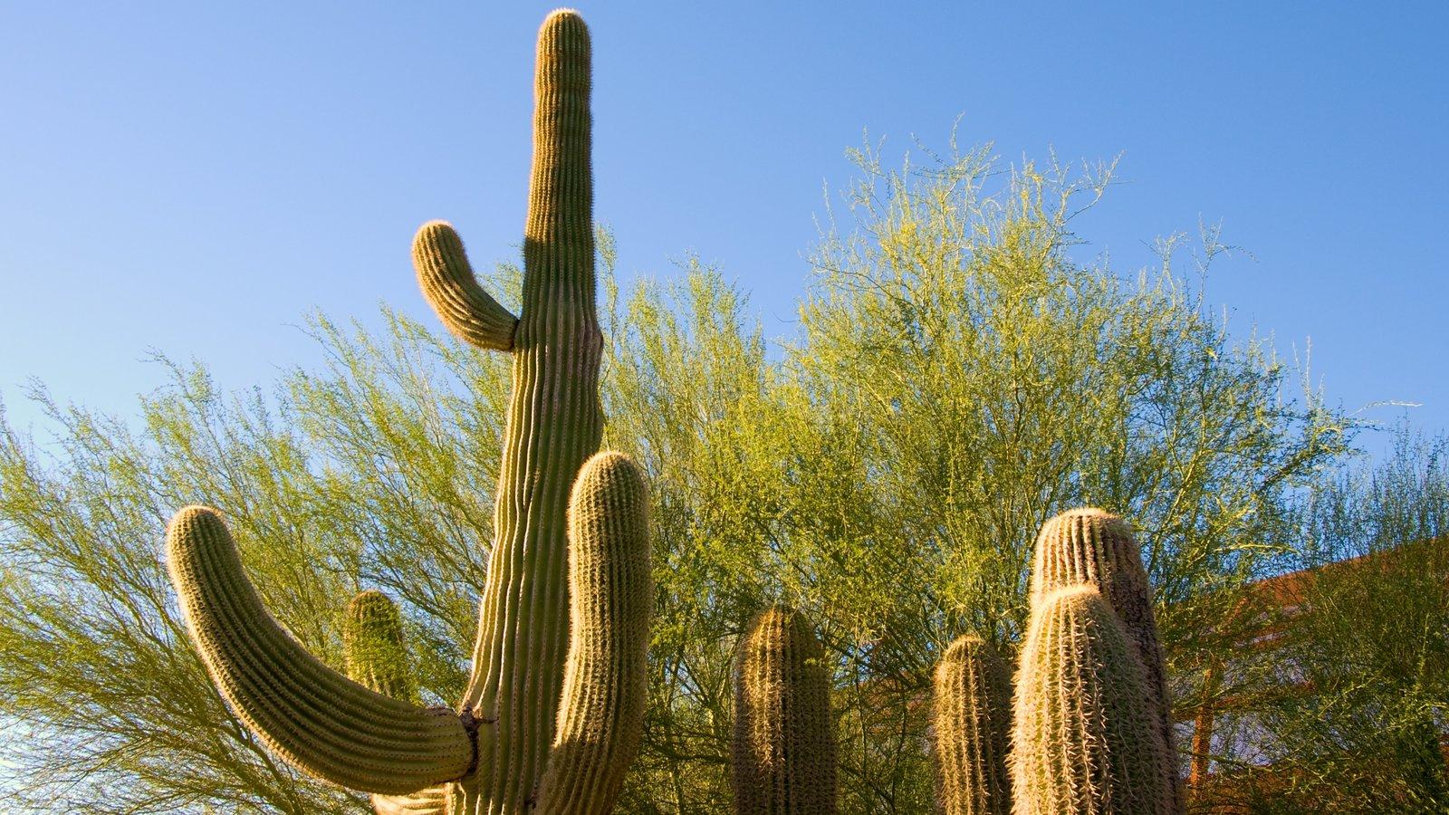 Desert Botanical Garden que inclui paisagens do deserto e um parque
