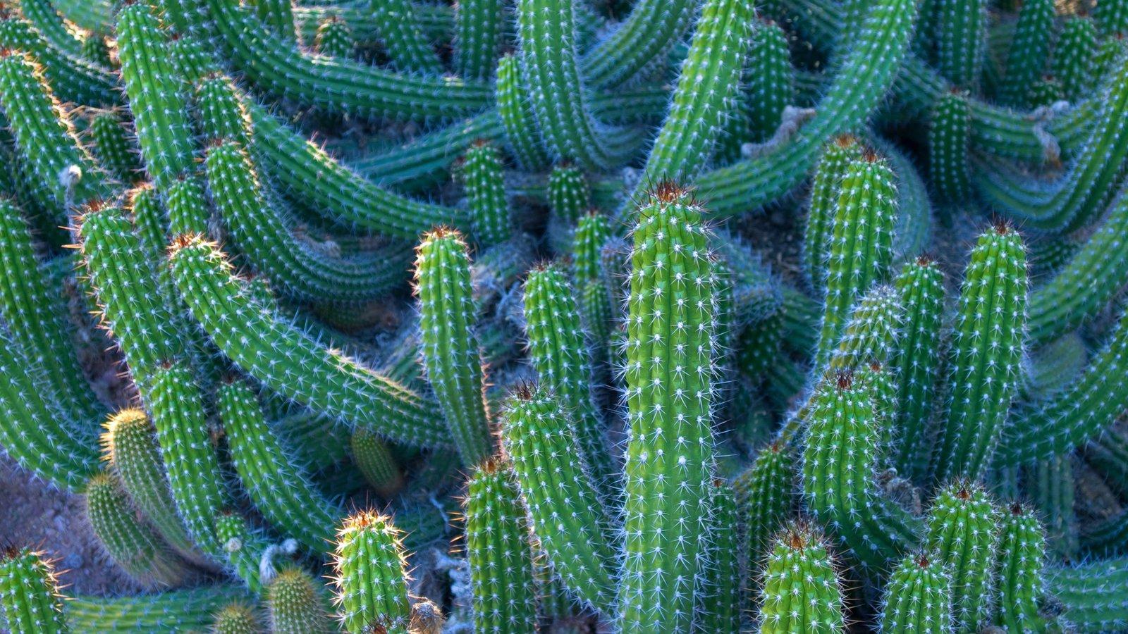 Desert Botanical Garden caracterizando um parque e flores silvestres