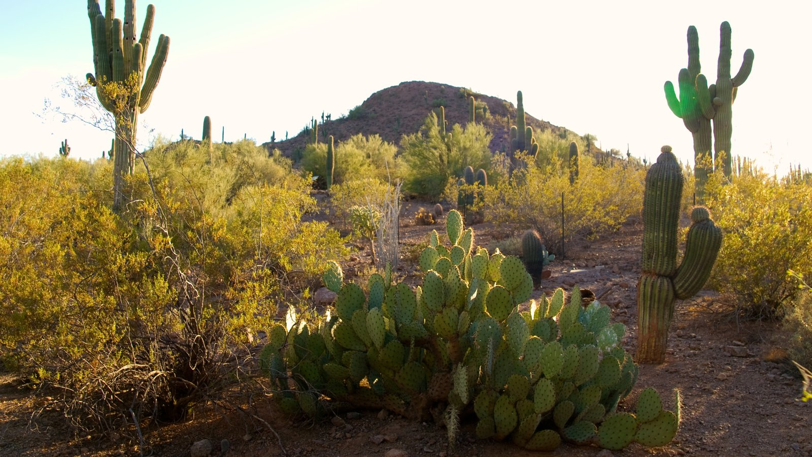 Nature Pictures: View Images of Desert Botanical Garden