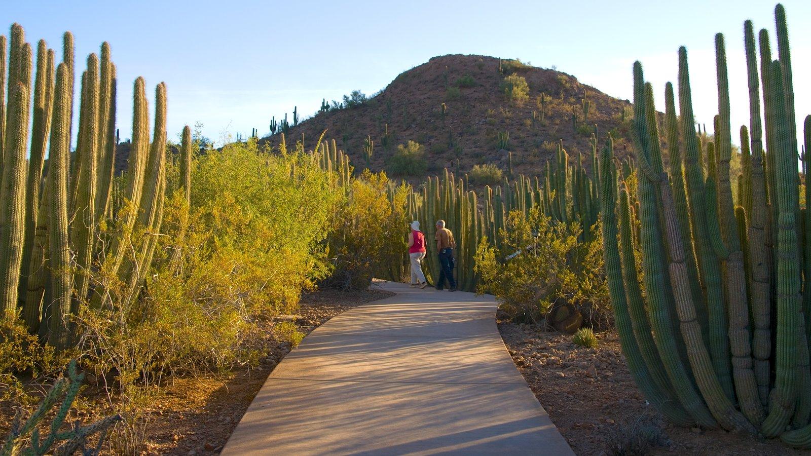 Desert Botanical Garden mostrando um parque, escalada ou caminhada e paisagem