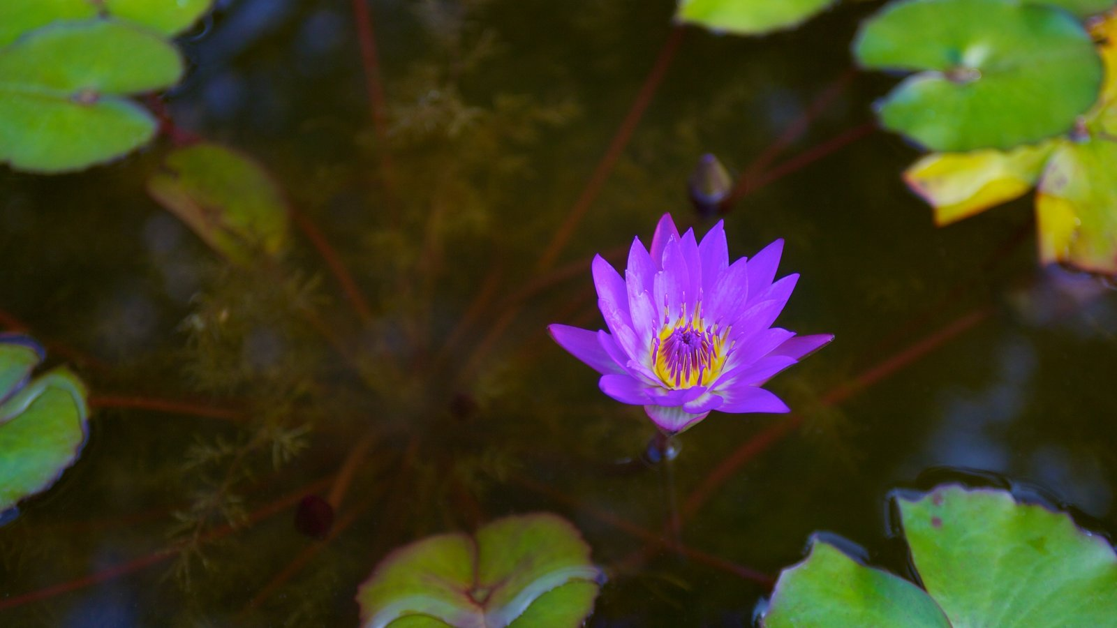 Flowers Pictures: View Images of Zilker Botanical Garden