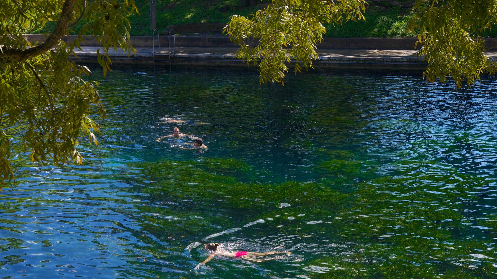 Zilker Park showing swimming, a lake or waterhole and a park