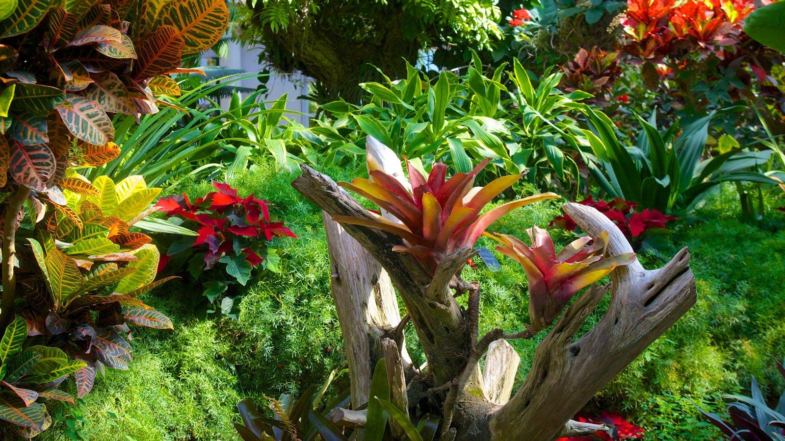 San Antonio Botanical Gardens Pictures View Photos Images Of San