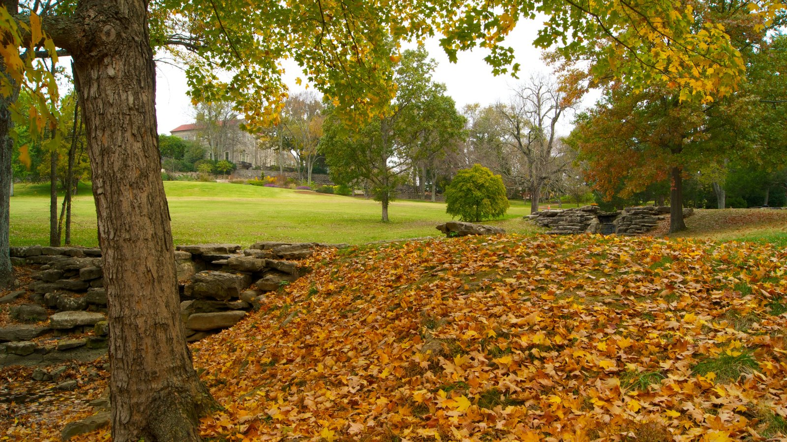 Cheekwood Botanical Gardens And Museum Of Art Featuring A Park, Landscape  Views And Autumn Leaves