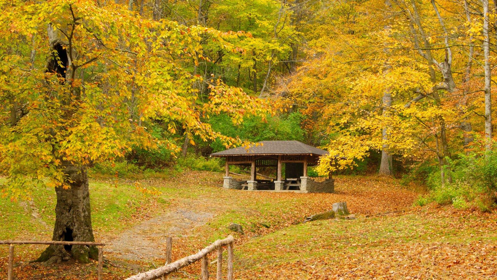 Edwin and Percy Warner Parks ofreciendo bosques, un parque y hojas de otoño