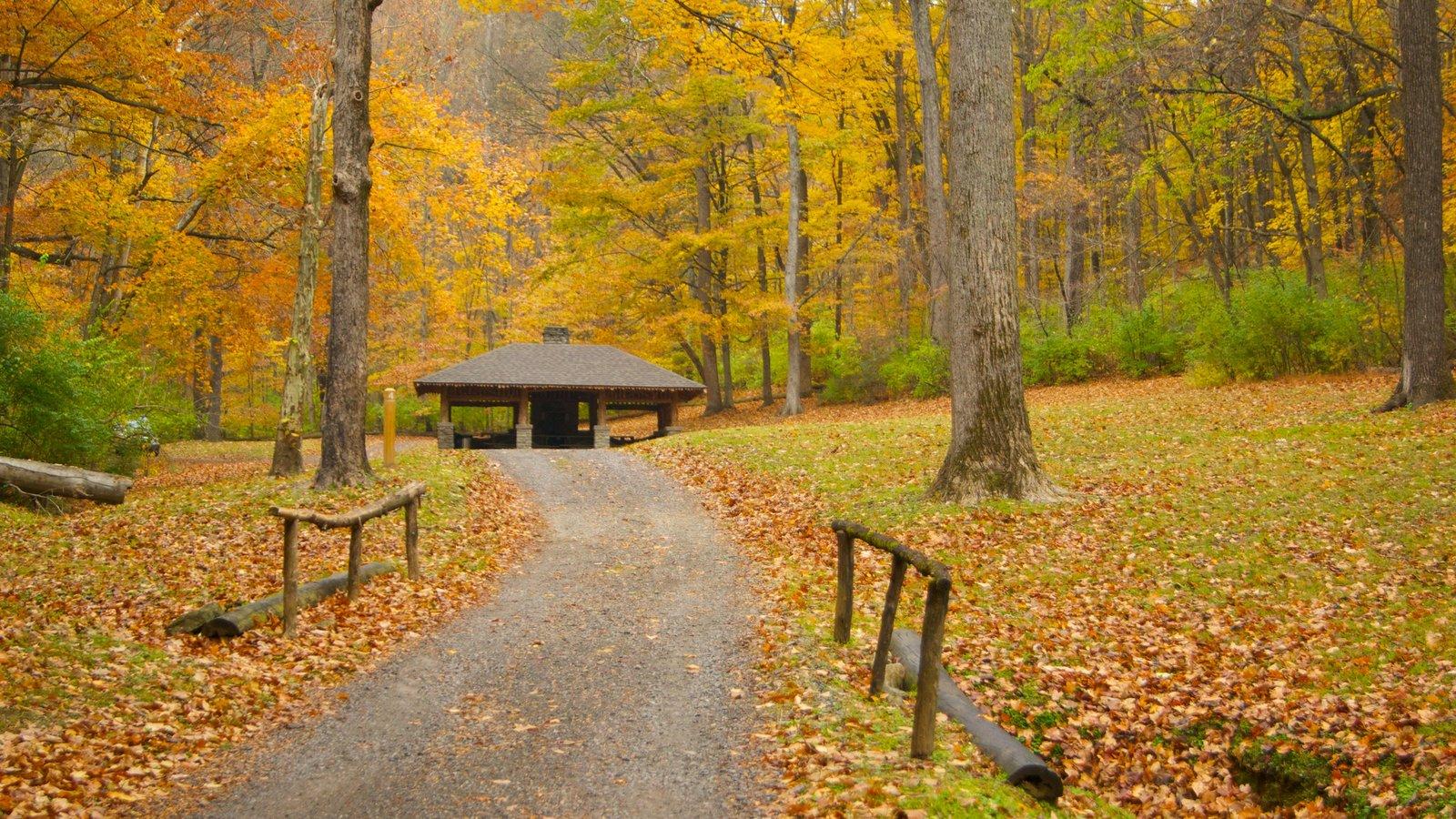 Edwin and Percy Warner Parks ofreciendo los colores del otoño, escenas forestales y vistas de paisajes