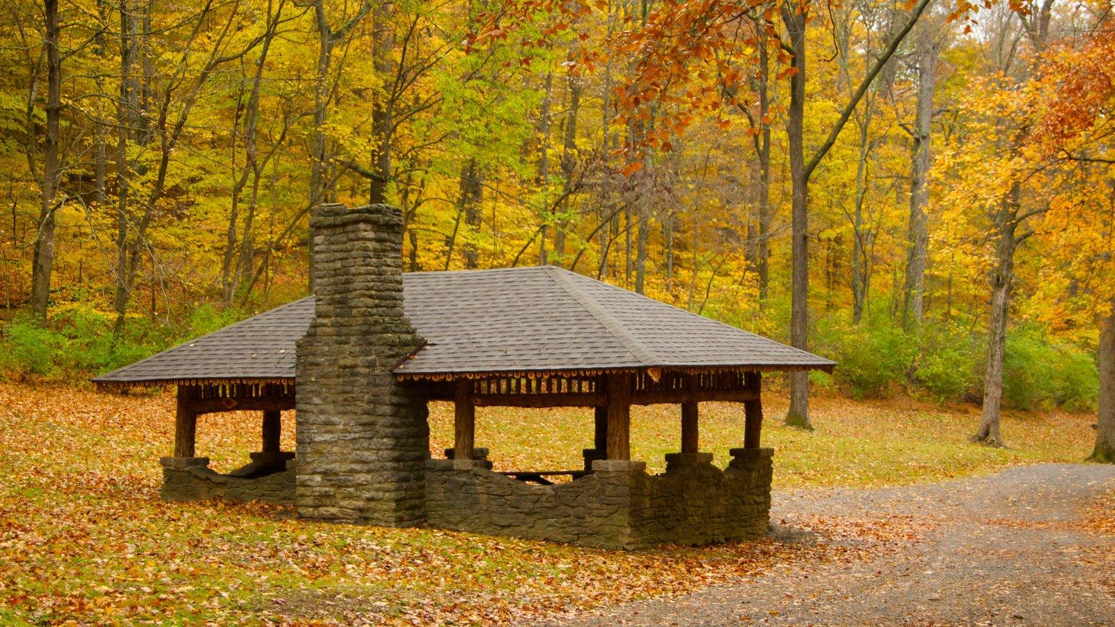 Edwin and Percy Warner Parks ofreciendo los colores del otoño y un parque