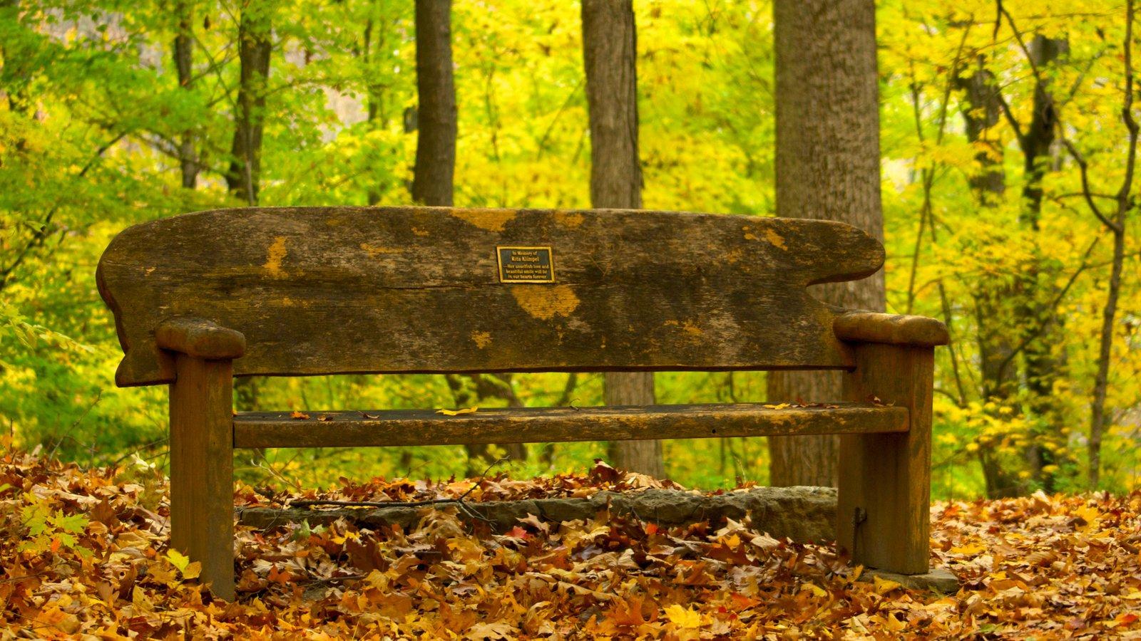 Edwin and Percy Warner Parks mostrando un jardín, hojas de otoño y escenas forestales