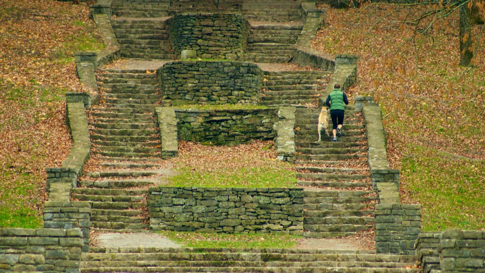 Edwin and Percy Warner Parks ofreciendo un parque y senderismo o caminata