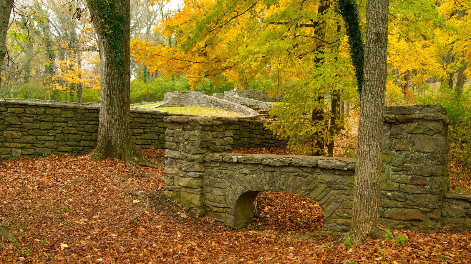 Edwin and Percy Warner Parks ofreciendo un parque, los colores del otoño y escenas tranquilas