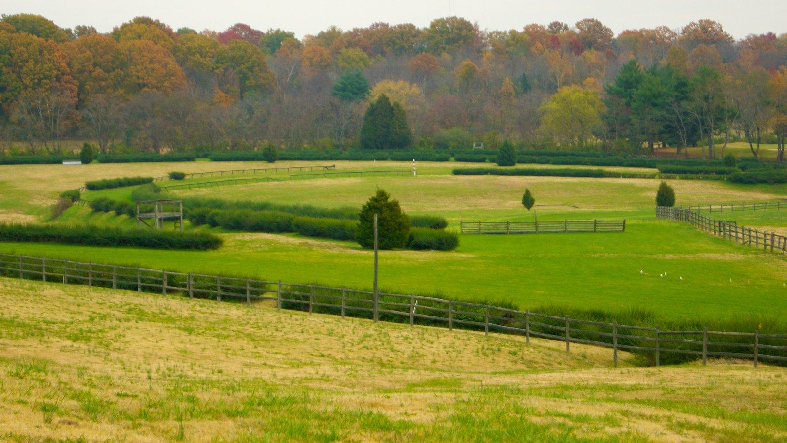 Edwin and Percy Warner Parks mostrando un parque, escenas tranquilas y vistas de paisajes