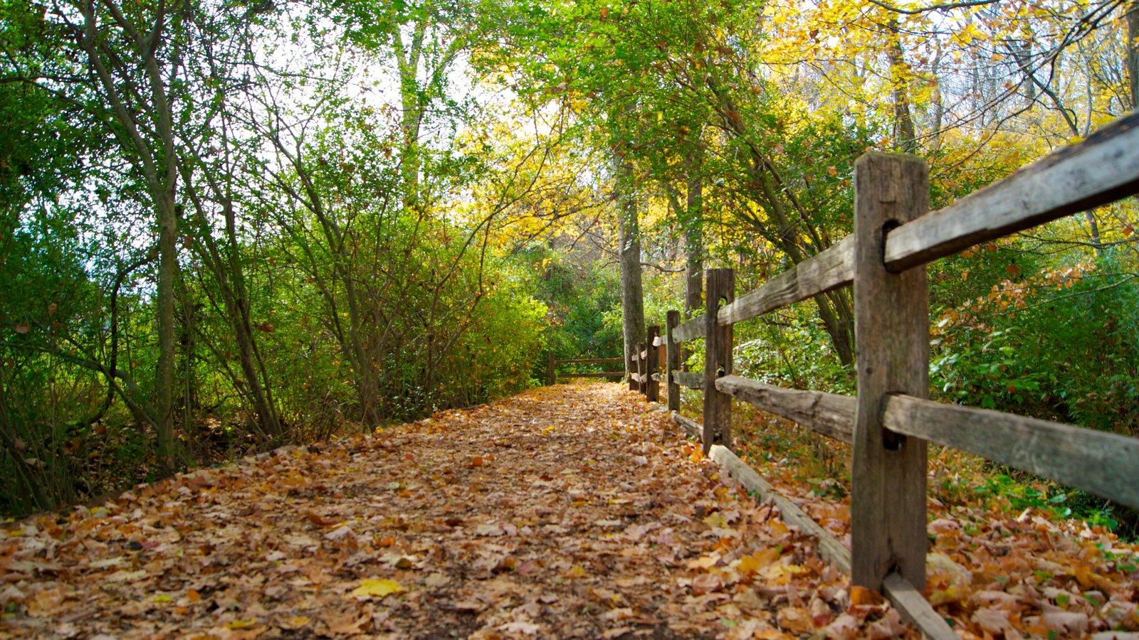 The Hermitage que incluye un parque, bosques y hojas de otoño