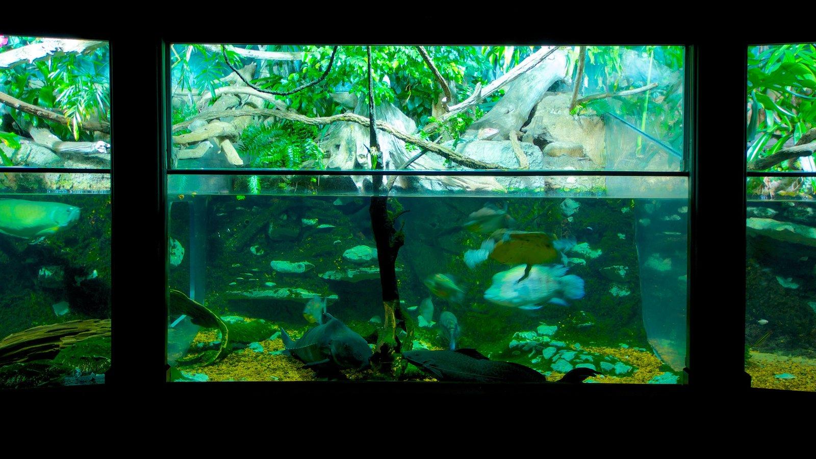 Nashville Zoo featuring marine life, interior views and zoo animals