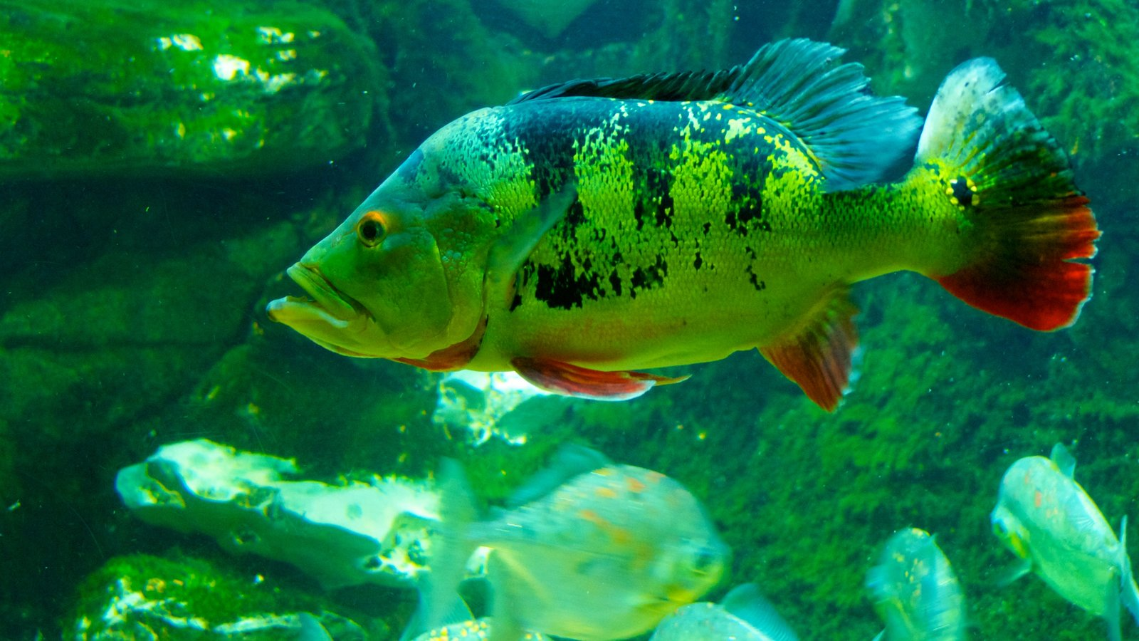 Nashville Zoo which includes marine life, zoo animals and interior views
