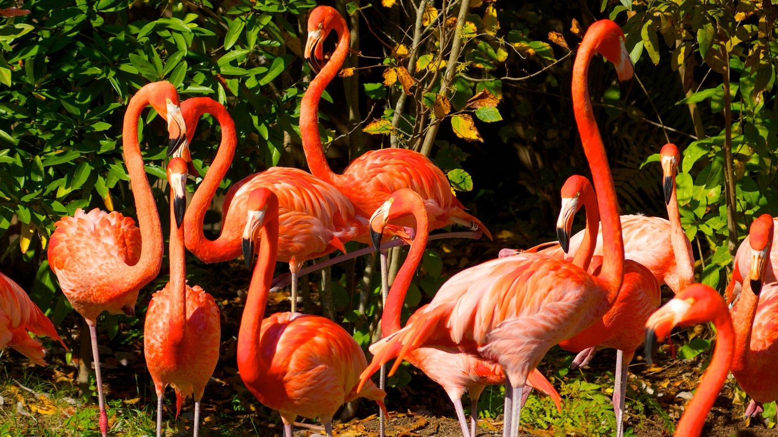Nashville Zoo featuring bird life and zoo animals