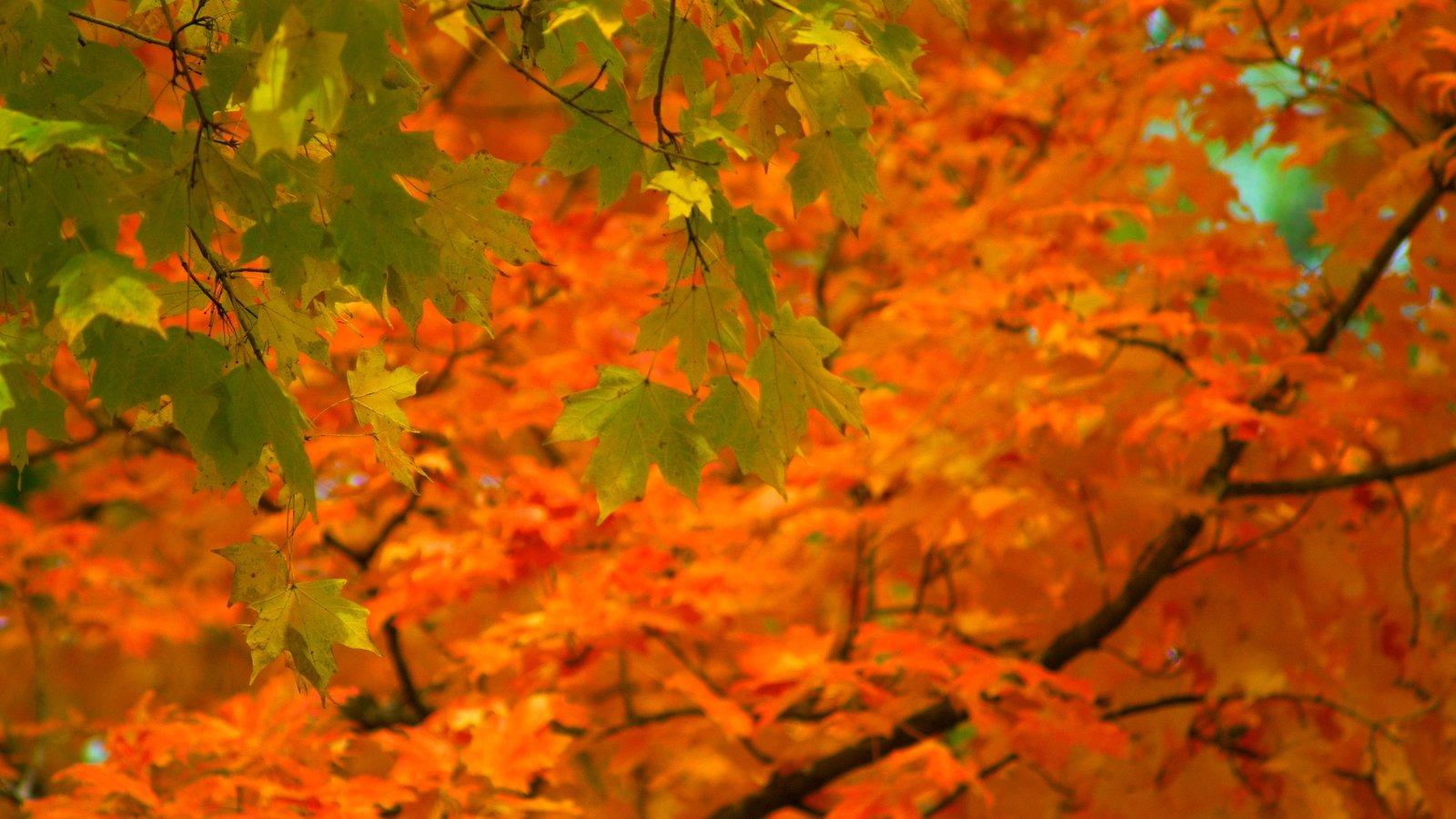 Belle Meade Plantation ofreciendo hojas de otoño