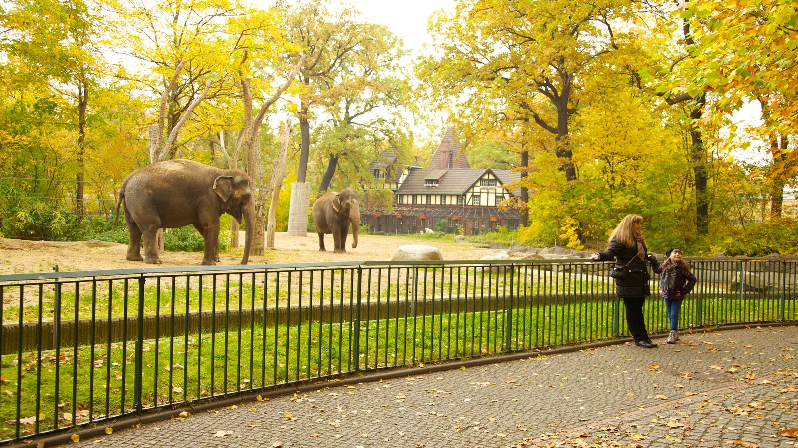 Berlin Zoo which includes land animals, autumn leaves and zoo animals