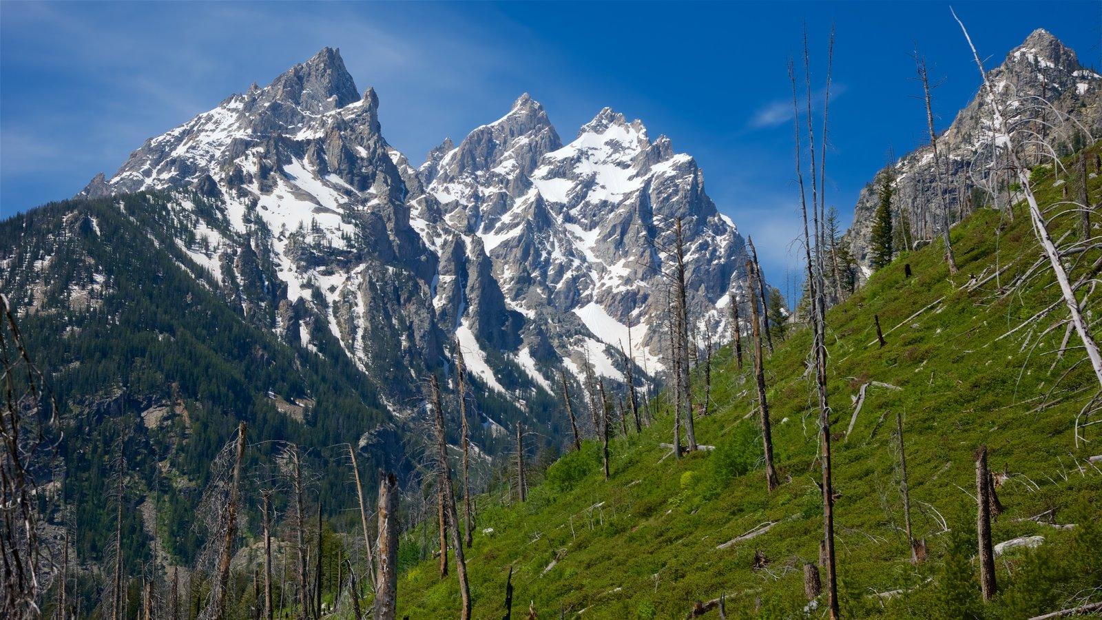 Lago Jenny que incluye montañas, escenas tranquilas y nieve