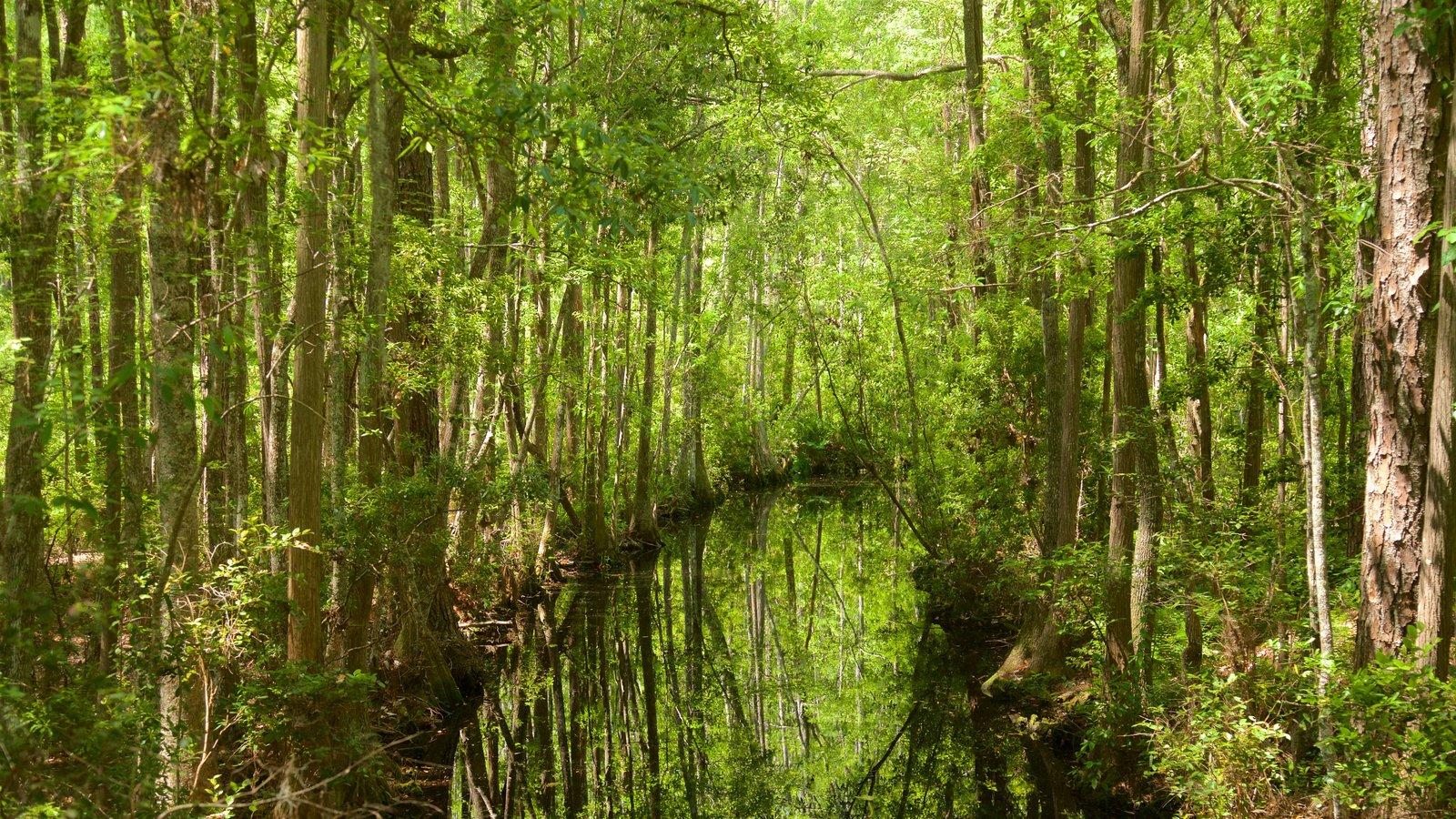 Parque Okefenokee Swamp mostrando escenas forestales