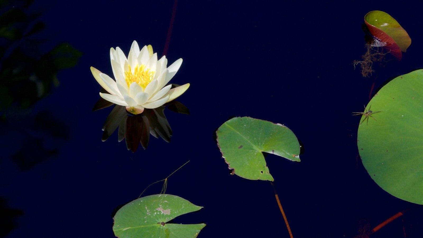 Parque Okefenokee Swamp que incluye flores silvestres y un estanque