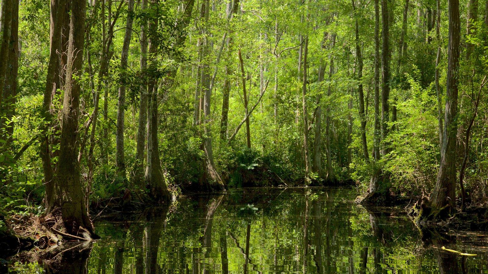 Parque Okefenokee Swamp ofreciendo un río o arroyo y escenas forestales