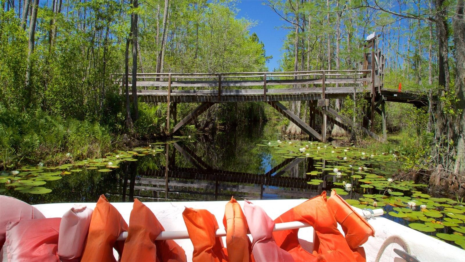 Parque Okefenokee Swamp mostrando un río o arroyo, bosques y flores silvestres
