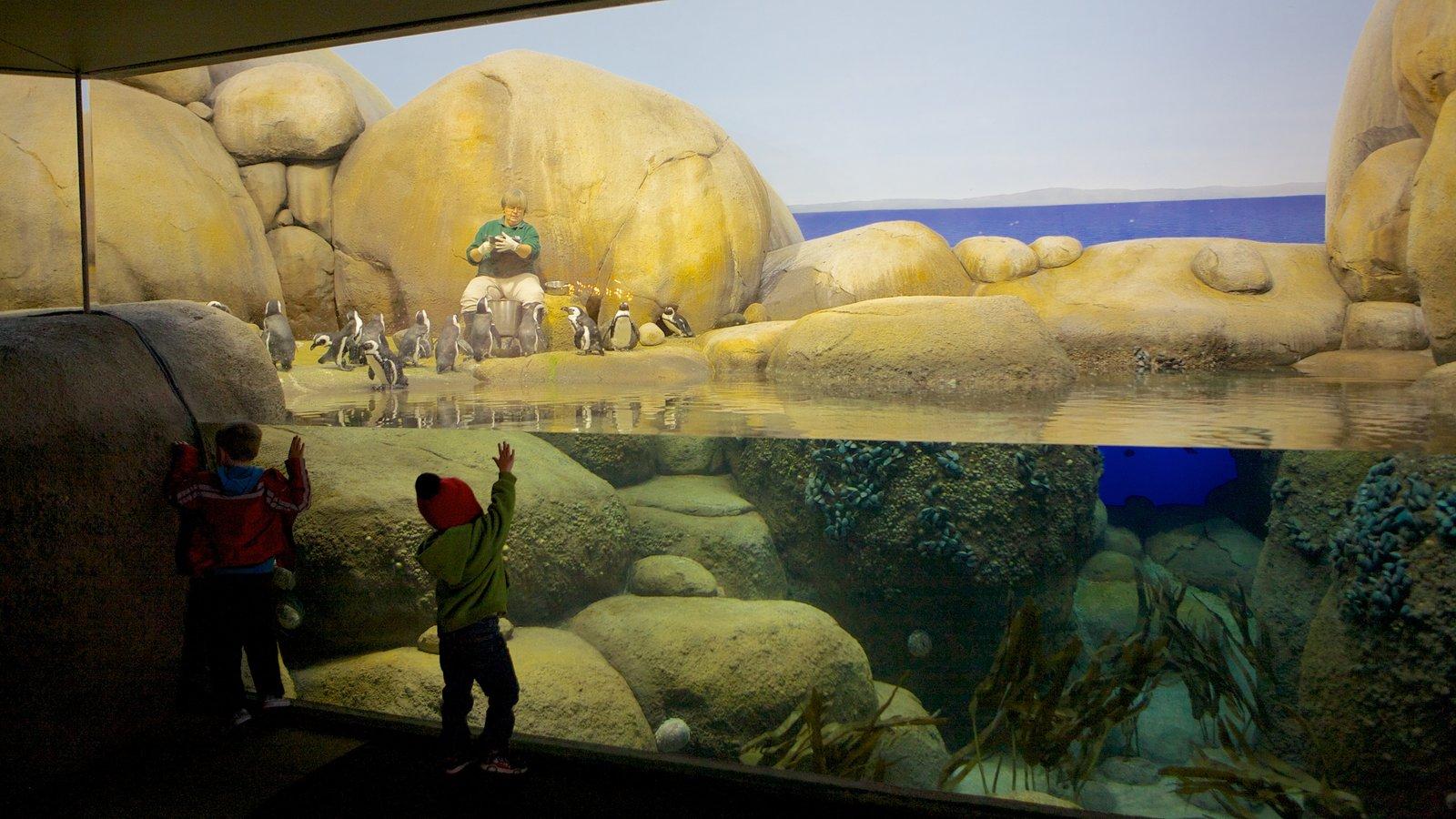 Zoo do Minnesota mostrando vistas internas, recifes coloridos e vida marinha