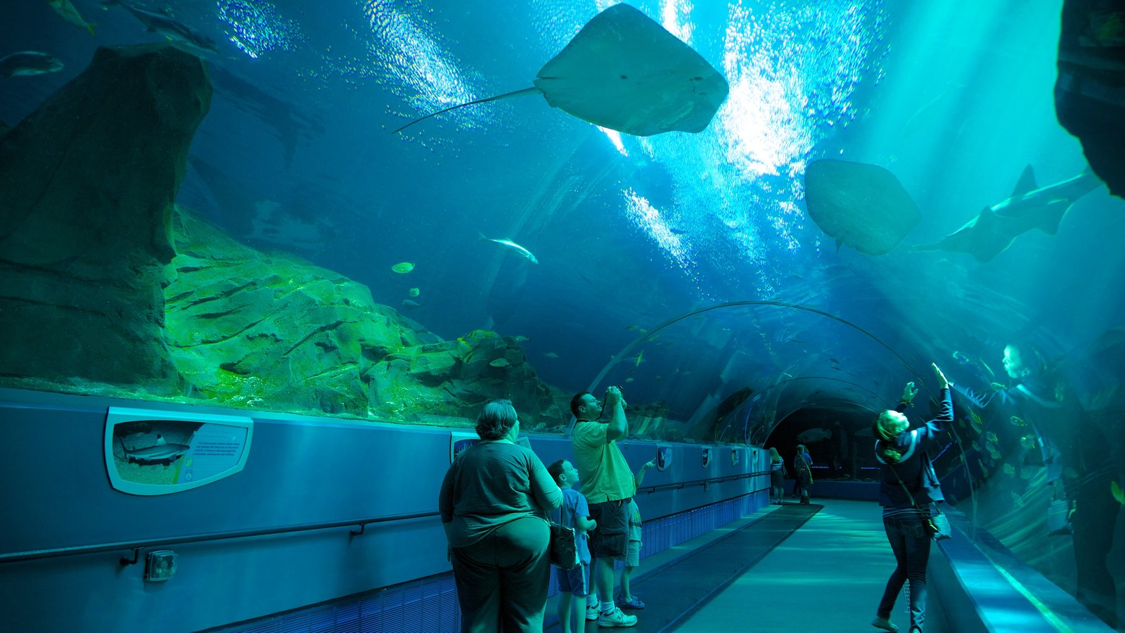 Atlanta featuring marine life and interior views as well as a family
