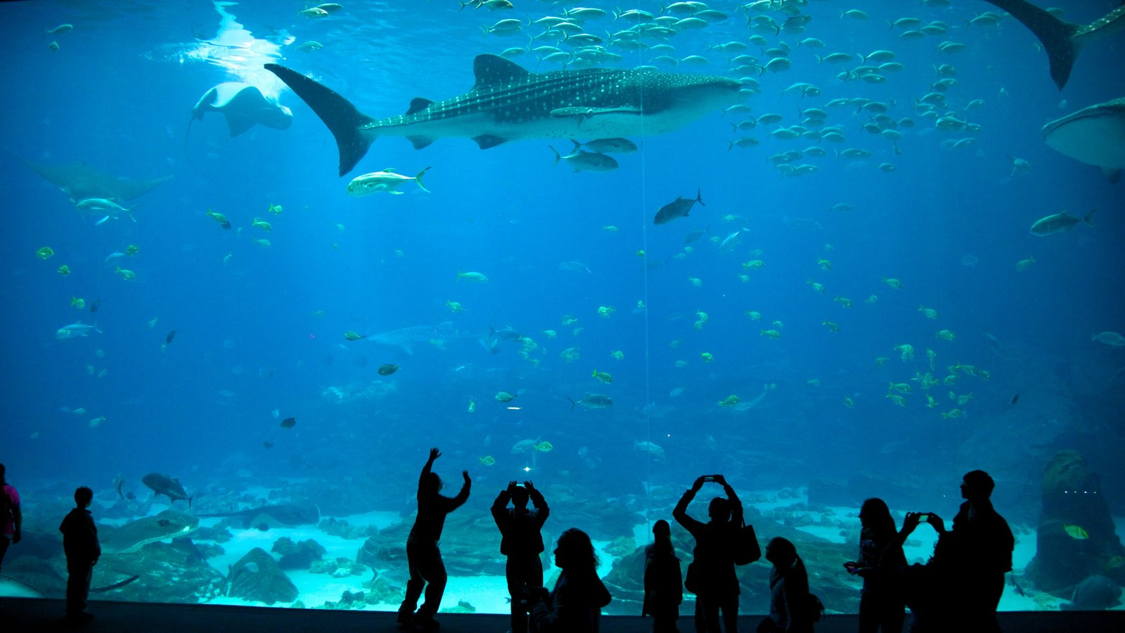 Atlanta caracterizando vida marinha e vistas internas