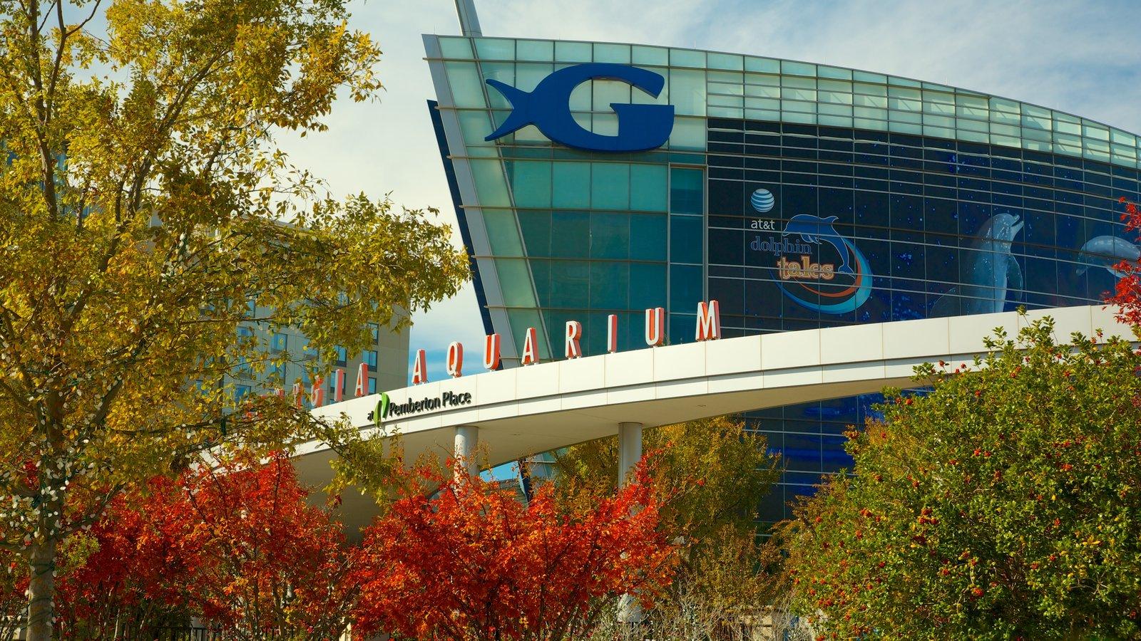 Atlanta mostrando folhas de outono, uma cidade e vida marinha