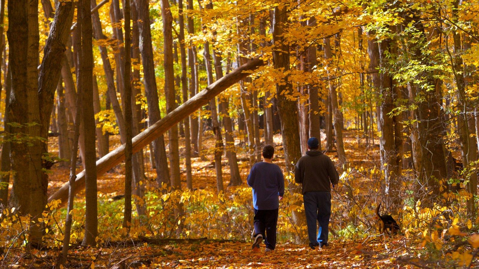 Eagle Creek Park ofreciendo senderismo o caminata, bosques y un parque