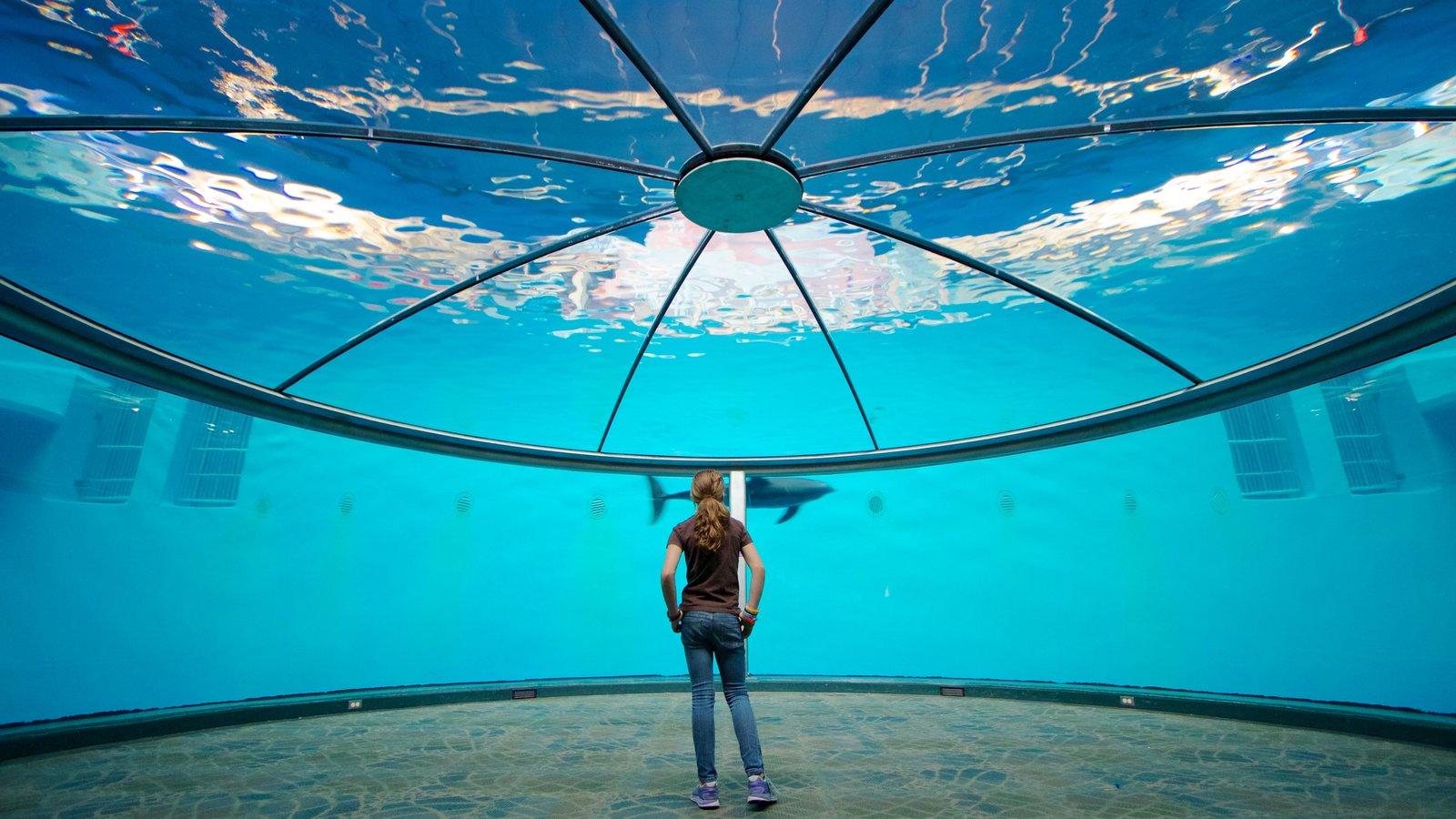 Indianapolis Zoo que incluye vida marina y vistas interiores y también una mujer