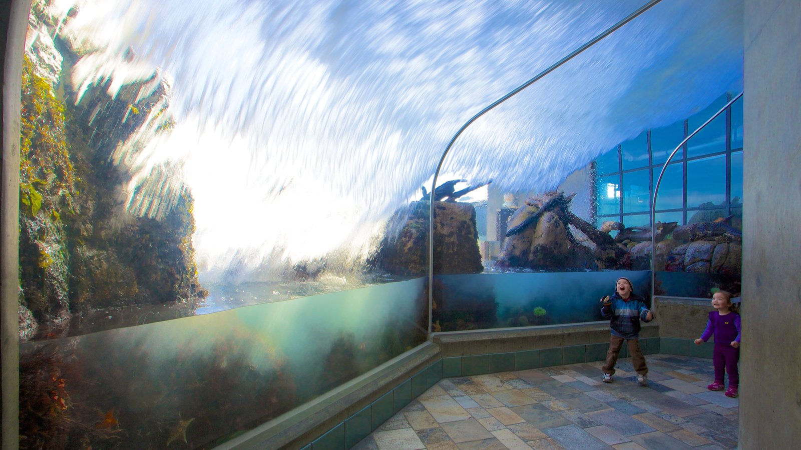 Monterey Bay Aquarium which includes interior views, marine life and general coastal views