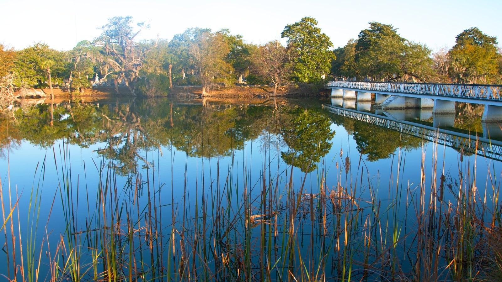 Charleston que inclui um rio ou córrego, florestas e paisagem