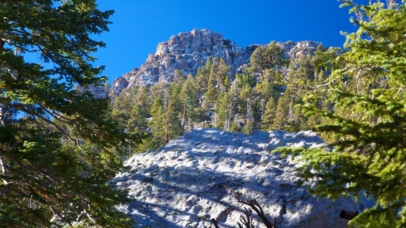 Palm Springs ofreciendo vistas de paisajes, un barranco o cañón y montañas