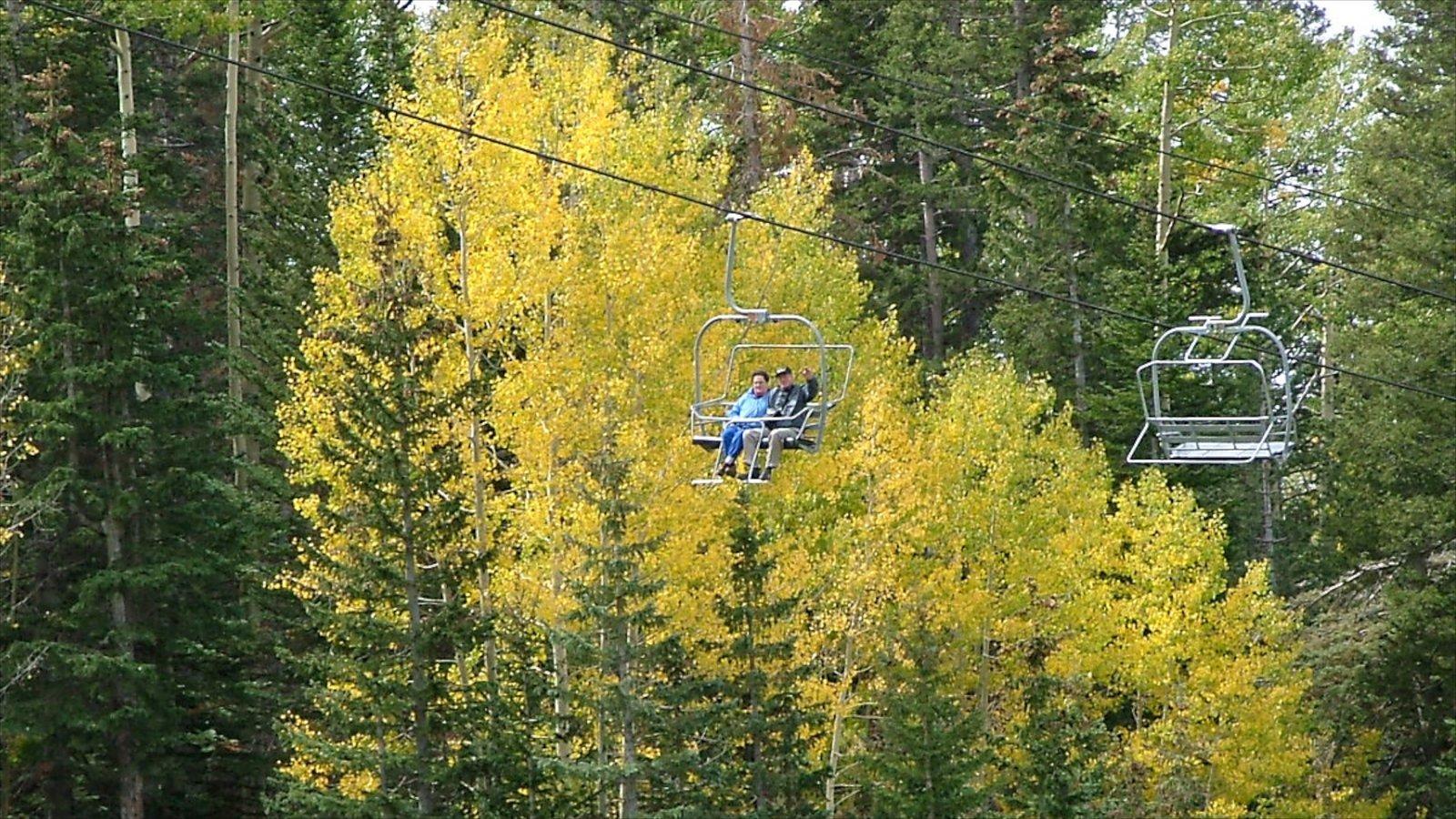 Flagstaff que inclui paisagem, cenas de floresta e uma gôndola