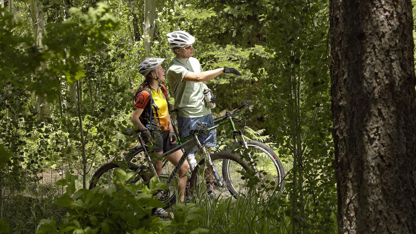 Flagstaff caracterizando florestas, um parque e paisagem