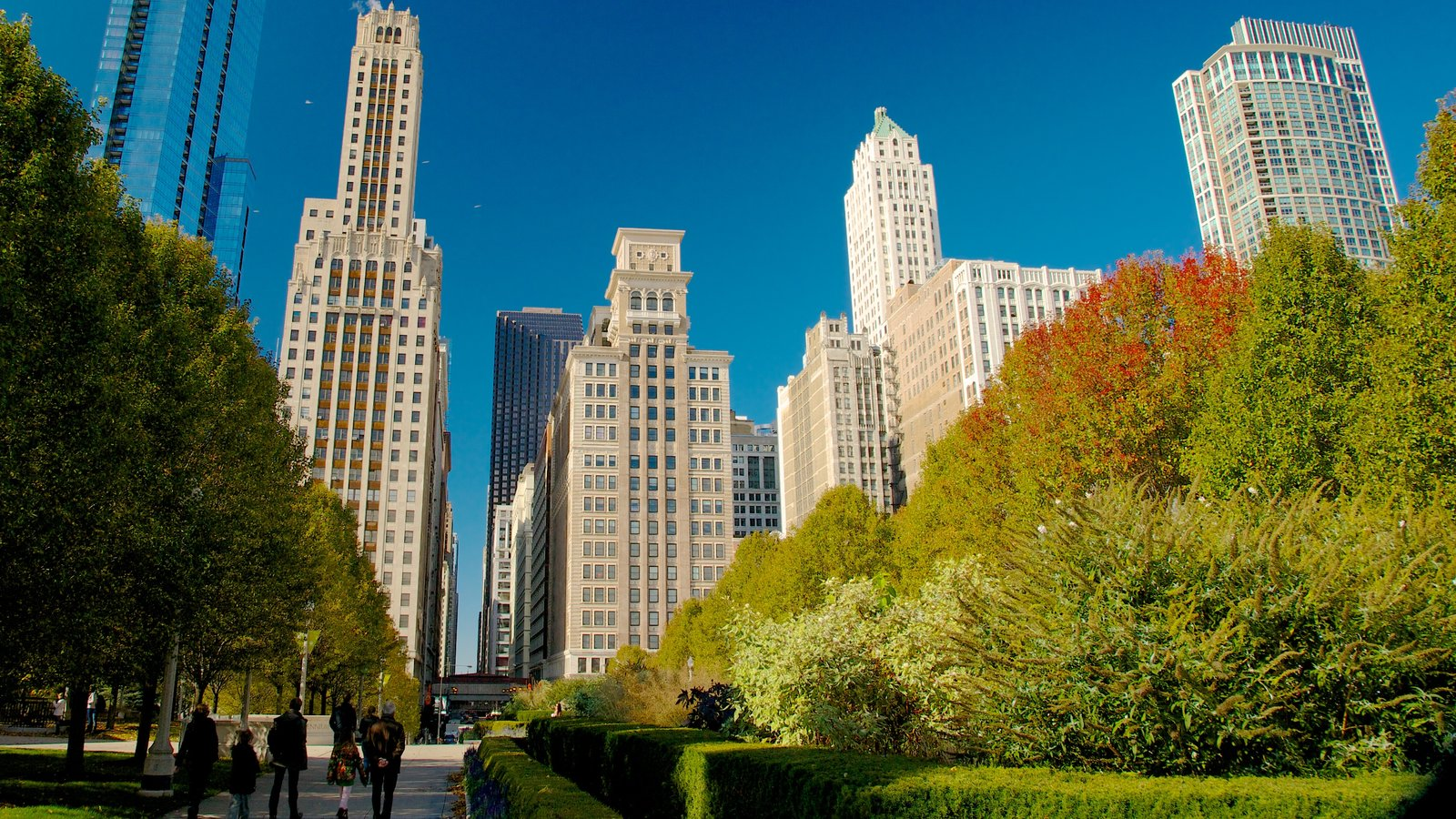 Millennium Park showing a city, a high rise building and a garden