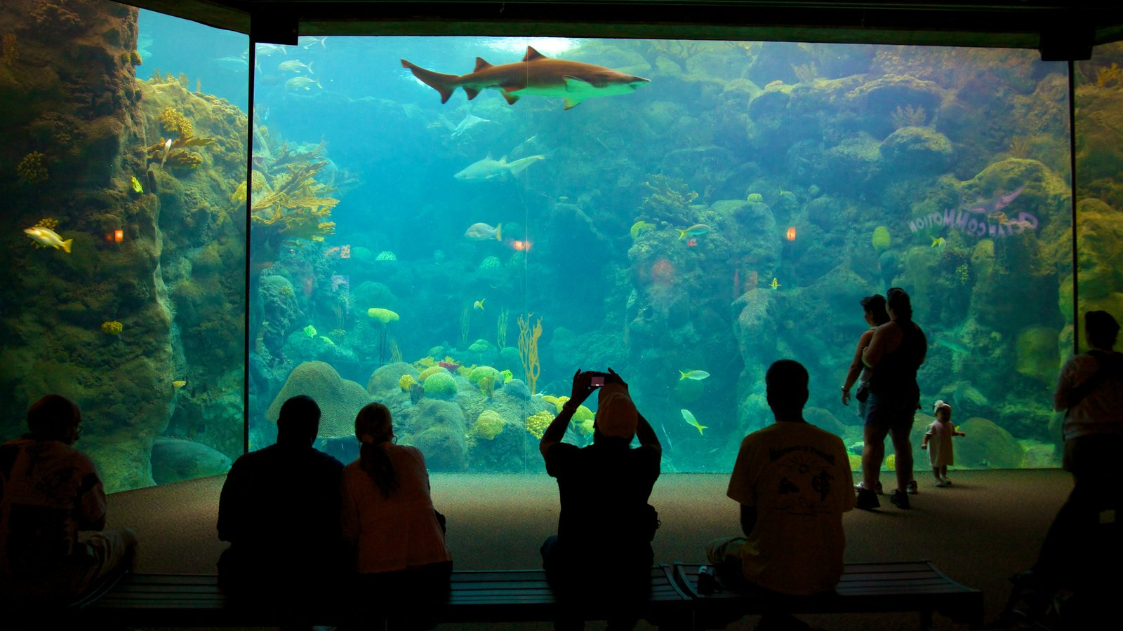 Tampa showing marine life and interior views as well as a small group of people
