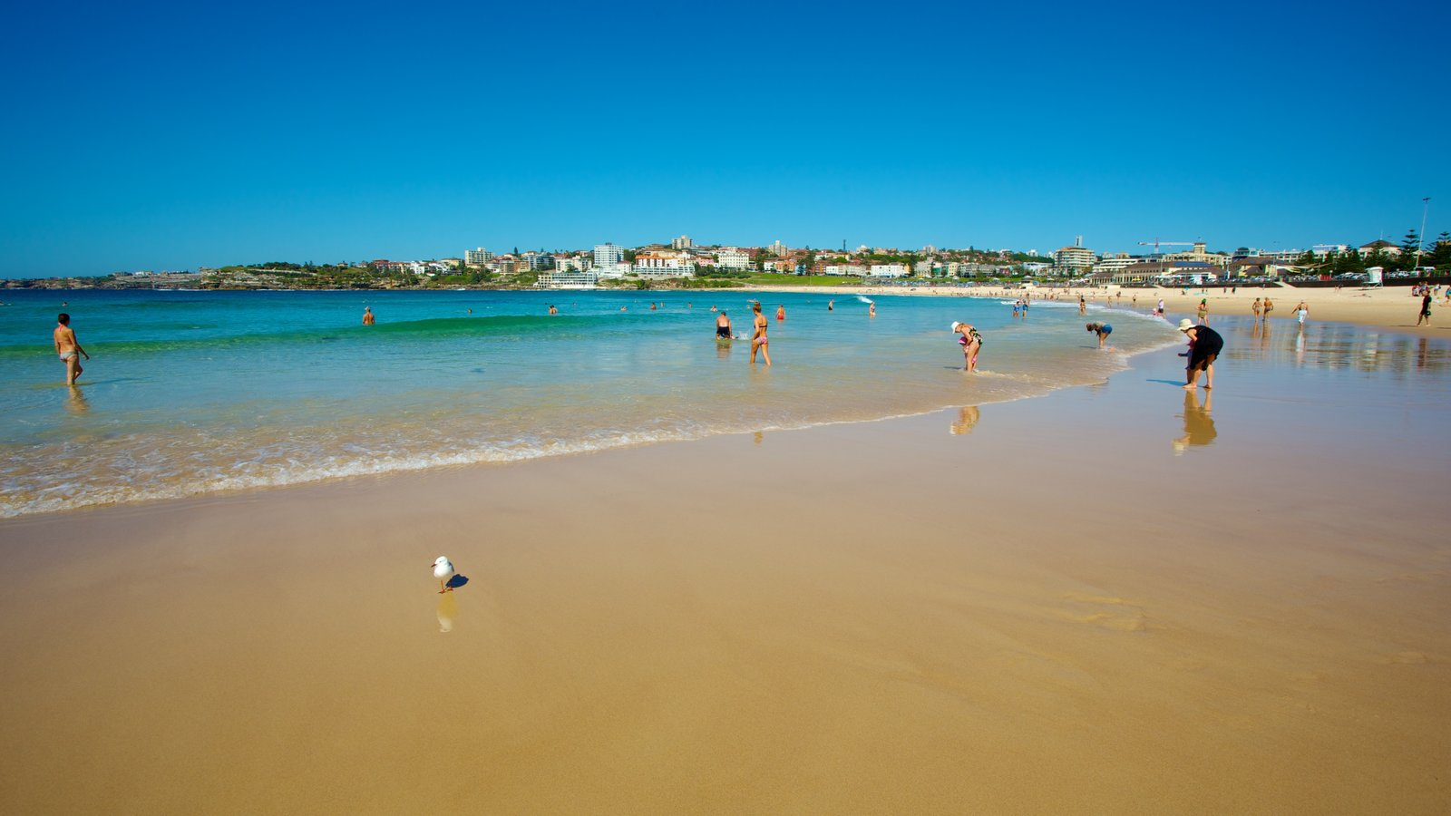 Sydney showing swimming and a beach as well as a large group of people