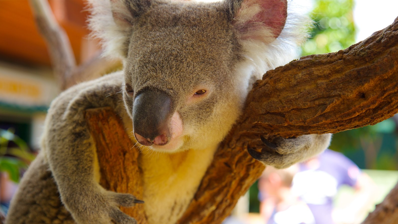 Sydney which includes cuddly or friendly animals and zoo animals