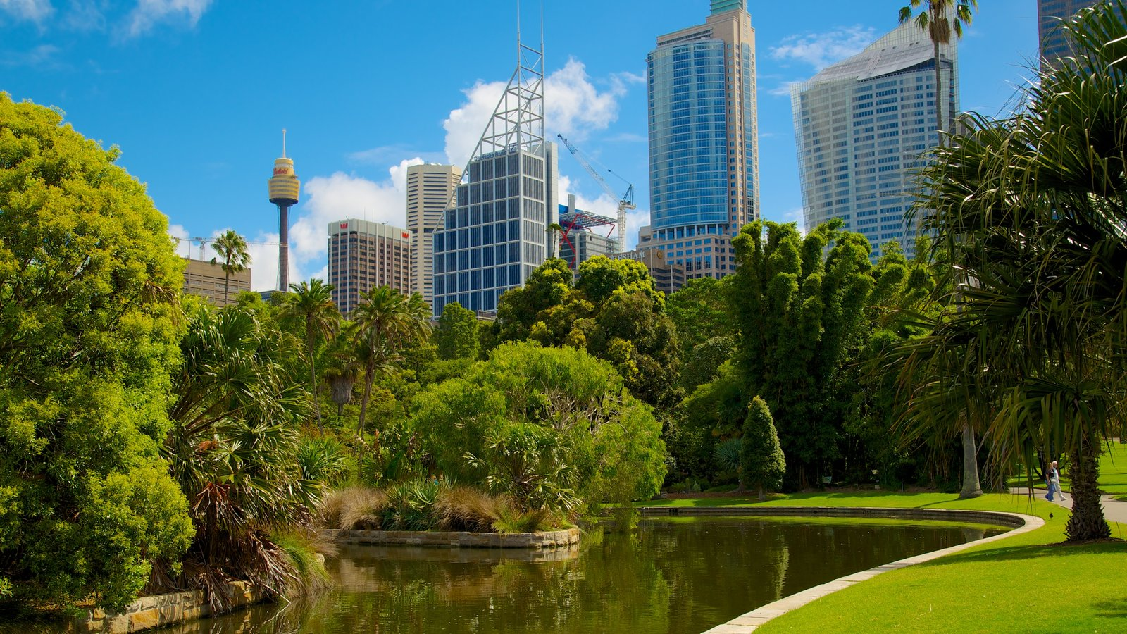 Sydney featuring a pond, a garden and a skyscraper