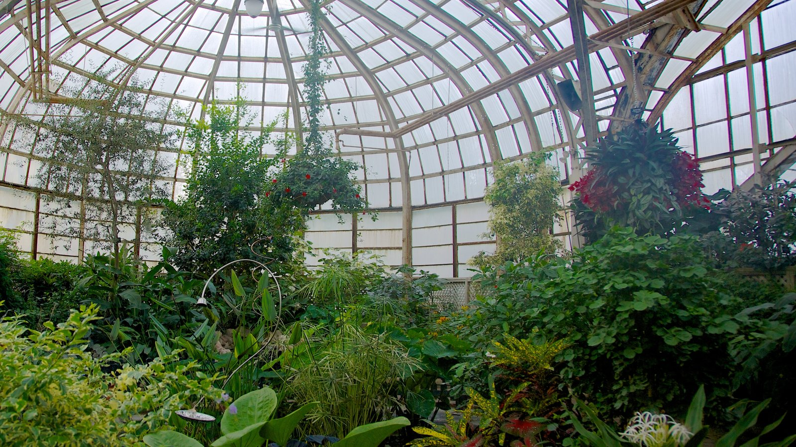 Lincoln Park Conservatory showing a garden, flowers and interior views