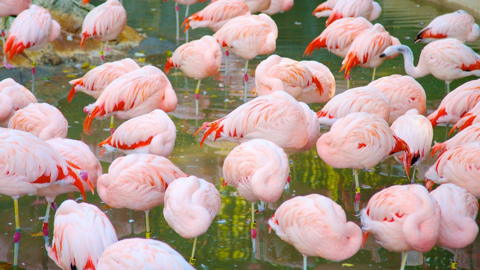 Zoo Atlanta showing zoo animals and bird life